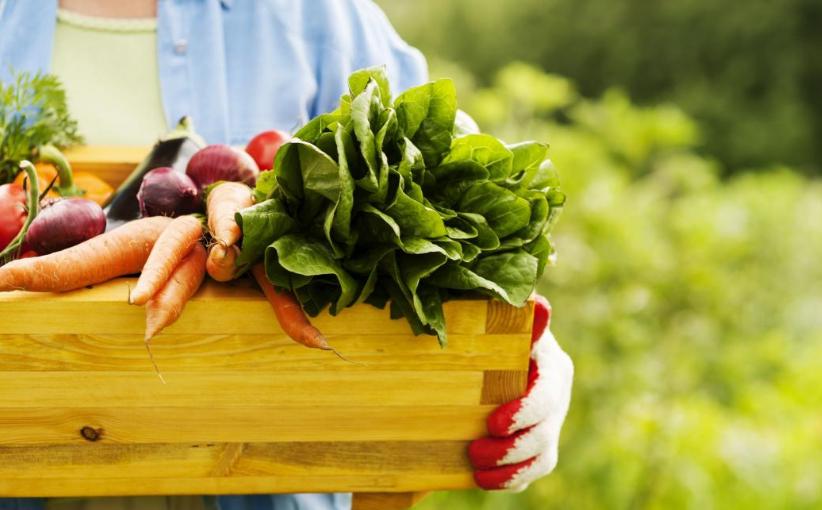 dieta con prodotti biologici